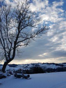 Baum + Aussicht 1