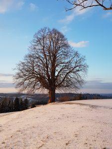 Baum + Himmel 3